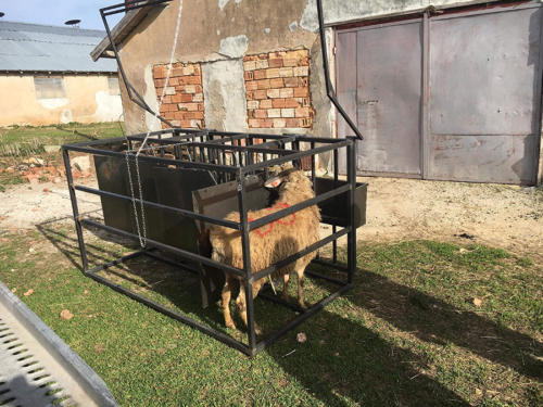 Платформа за доене на овце от Ай Ен Ви 2014 ЕООД