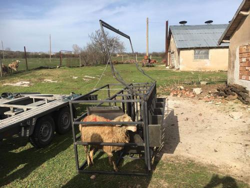 Платформа за доене на овце с или без агрегат
