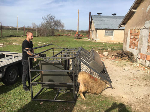Milking platform for sheep of different sizes